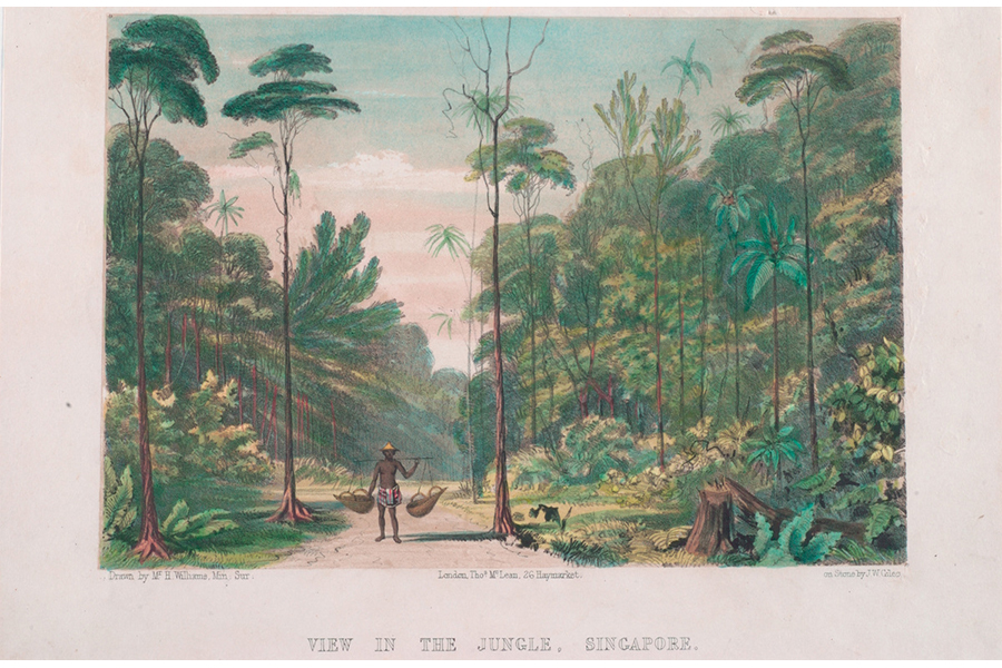 print-entitled-view-in-the-jungle